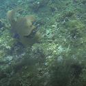 Abanico de mar