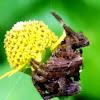 Common garden spider female