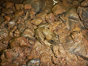 Photo: Frog well inside the cave