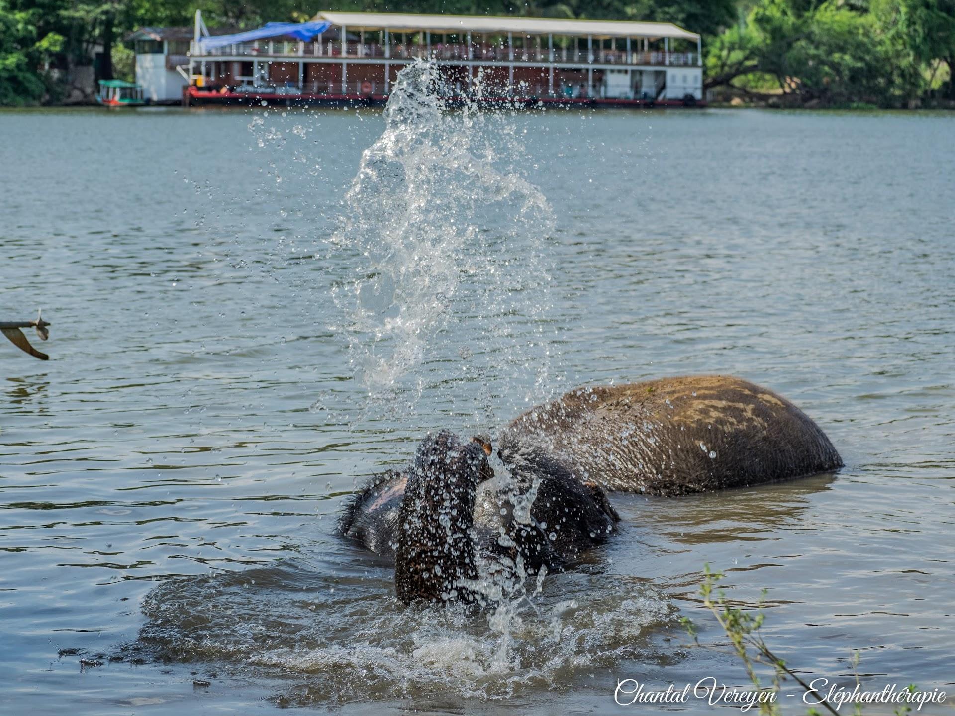 ChiangRaï,Staged'éléphanthérapieChantalVereyen