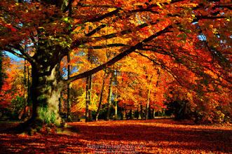 Photo: Orton Tree