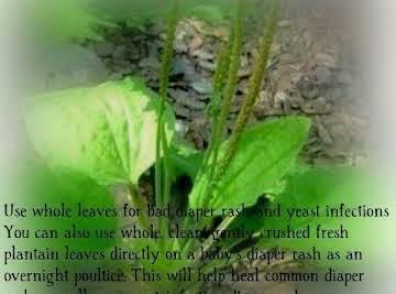 Backyard herbal #1 Plantain