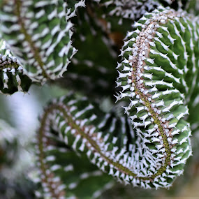 Slithering Cacti by Scot Gallion - Nature Up Close Other plants (  )