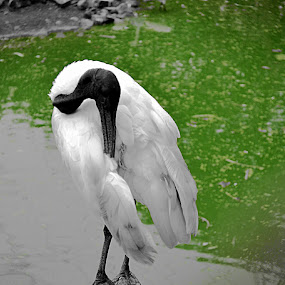 by Deependra Bapna - Animals Birds