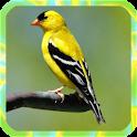 Bird song: icon
