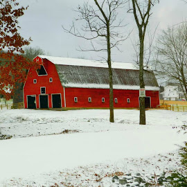 Red Barn by Karen Carter Goforth - Uncategorized All Uncategorized ( red, barn, snow, landscape, building, structure,  )