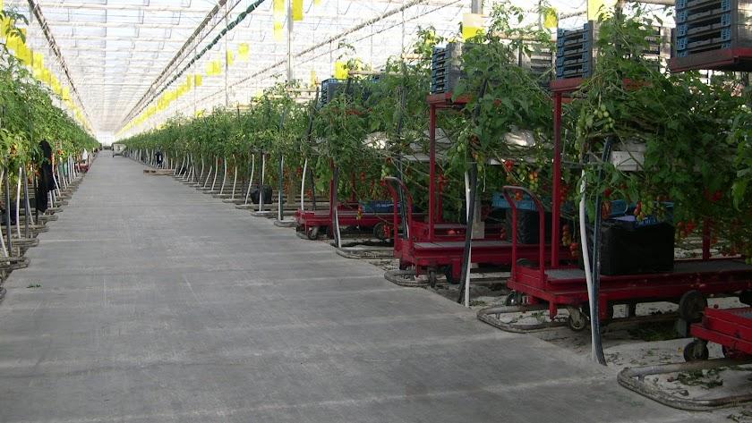 El invernadero avanza como ejemplo de sostenibilidad