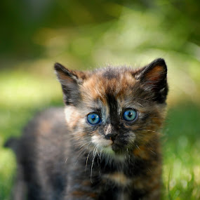 by Hallie Barta - Animals - Cats Portraits
