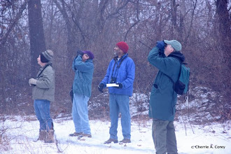 Photo: Bird counts at Gowing's Swamp
