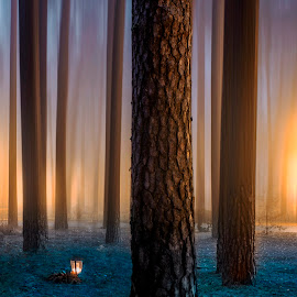 by Kennet Brandt - Landscapes Forests