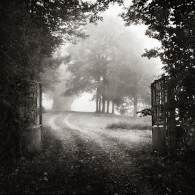 by Sébastien Muller - Landscapes Forests