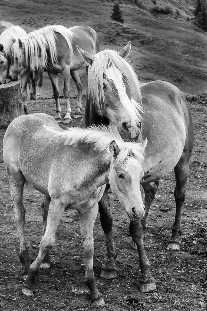 wild horses di gasparella andrea