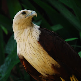 at bali zoo... by Mike Junior - Animals Birds