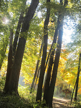 Photo: Beautiful fall photo in the forest at Hills and Dales Metropark in Dayton, Ohio.