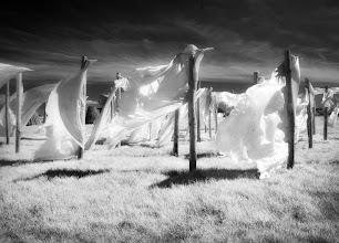 Photo: Zephyr  (Clive Haynes)