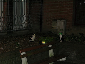 Photo: Look out, those cats have laser eyes!