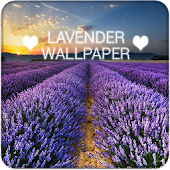 Lavender Wallpapers QHD