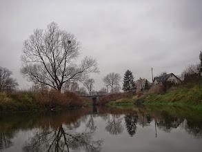 Photo: wielkich drzew
