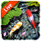 Koi Fish Live Wallpaper 3D