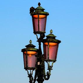 Venice by Claudiu Petrisor - Artistic Objects Other Objects ( pigeon, orange, sky, blue, venice, headlight,  )