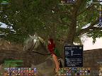 blue-saddled Mistrunner horse