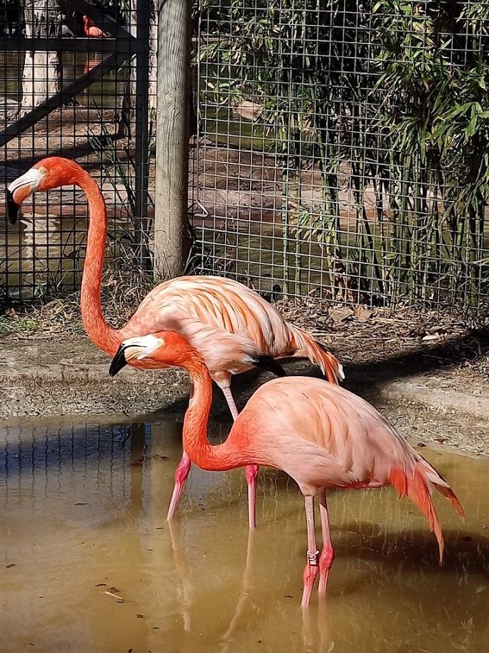 Foto Zoo Barcelona 14
