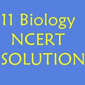11 th Biology NCERT Solution