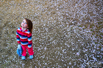 Photo: I debated about sharing a photo of one of my daughters here ... but I really love this photo, both of her and as a photo in general. Watching the Cherry Blossoms, especially when the petals are beginning to fall, is very mesmerizing. Especially for a 2 year old. :)