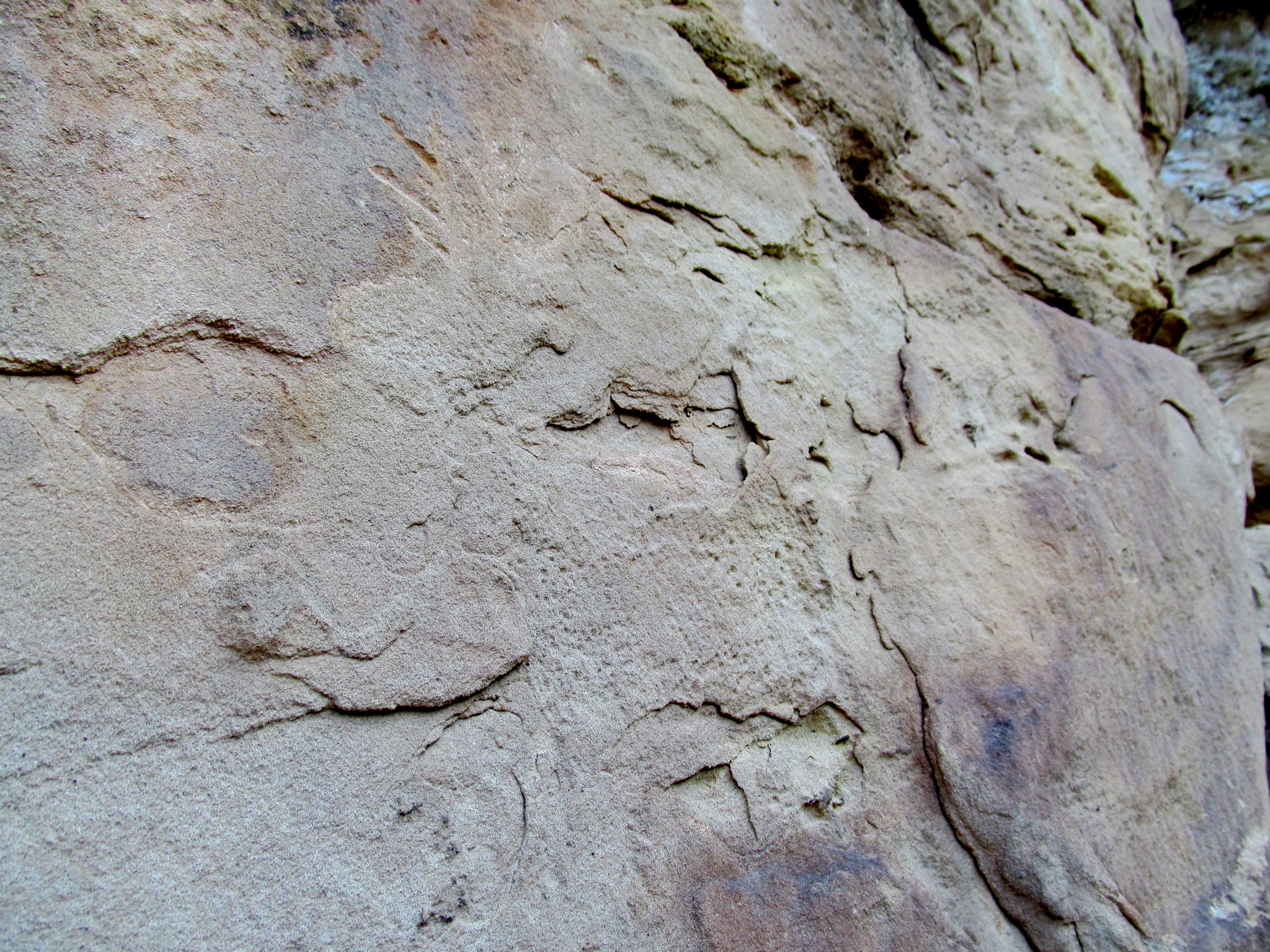 Photo: Disappearing deer petroglyph
