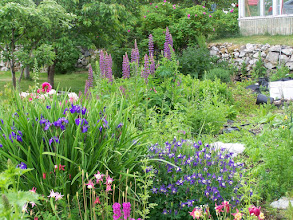 Photo: Beautiful home flower garden in Skagway; the long summer days make vegetation flourish  HEH