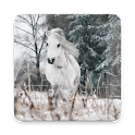 Pony Wallpapers: Equine Horse Lovers icon