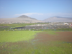 Photo: Marsh next to a garbage dump.