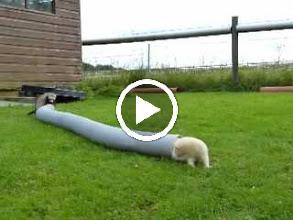 Video: Tigger, Honey and Skippy