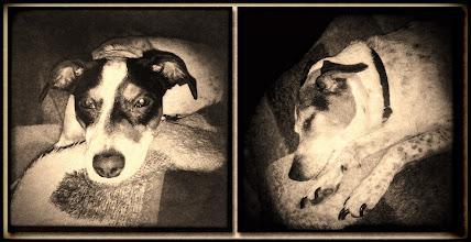 Photo: 22. december 2011 - Hundene