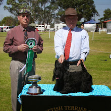 Photo: Best Aust. Bred and Reserve Challenge Dog, SUP CH ROBSCOTT  JUST A WEE LAD owned by Robyn Dryden