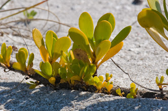 Photo: Beach plant