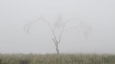 Photo: Arbolito fantasmal Arbolitos - Alto Selva Alegre 04-Marzo-2013