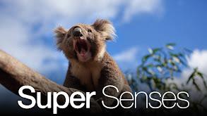 Super Senses thumbnail