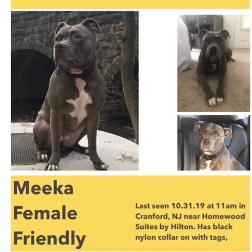 Meeka, MISSING Oct 31, 2019