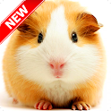 Cute Hamster Wallpapers icon