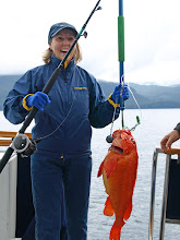 Photo: Red Snapper or Yellow Eye Rockfish