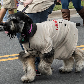 Parade walker by Steve Bales - Animals - Dogs Portraits (  )