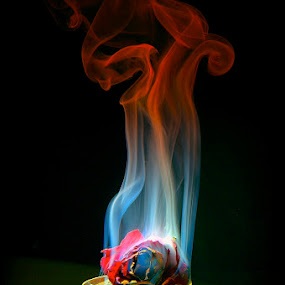 Smoking Rose by Francisco Little - Flowers Single Flower ( rose, red, gold, flower, smoke )