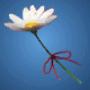 モーリュの花
