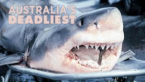 Australia's Deadliest thumbnail