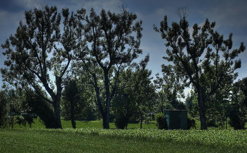 Uno sguardo nel verde di mauott
