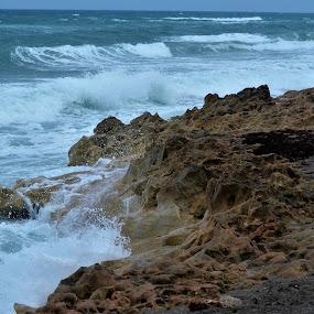 Waves Crashing on Rocks at Blowing Rocks Preserve near Port St. Lucie, Florida by Sheri Fresonke Harper - Landscapes Beaches ( waves, rocks, florida, beach, blowing rocks preserve, sheri fresonke harper, crash, port st. lucie,  )