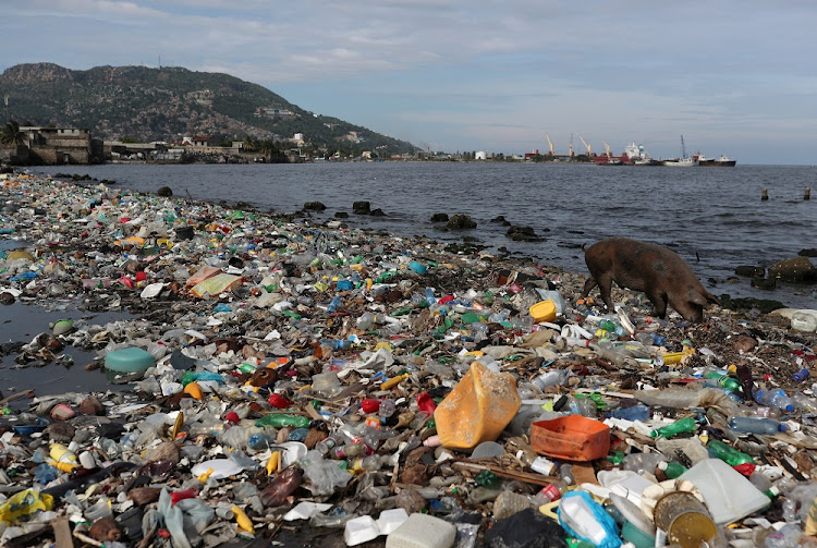 A pig forages in plastic and other pollution on the shores of Cap Haitian beach, Haiti on October 9 2018. Picture: REUTERS/Ricardo Rojas