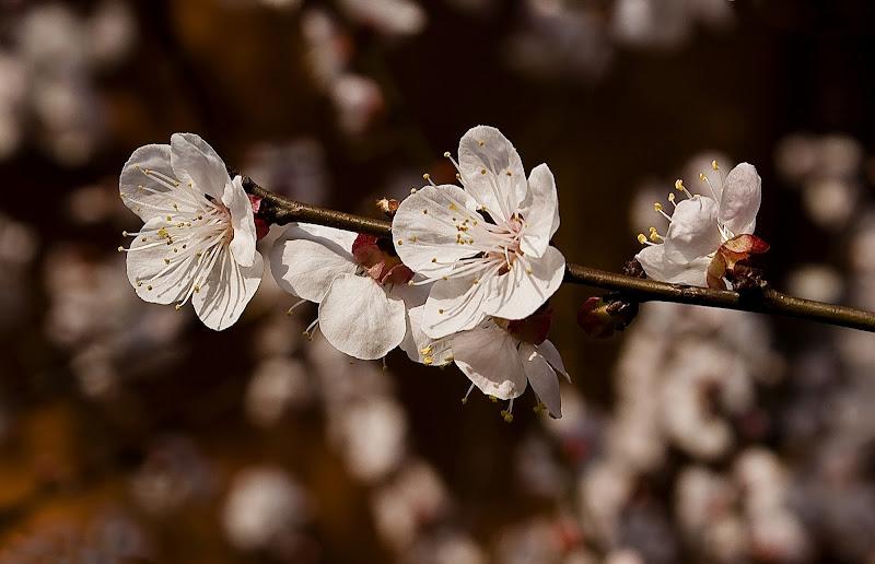 Voglia di primavera di carlo-bi
