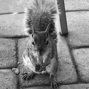 Squirrelly  by Rob King - Novices Only Wildlife